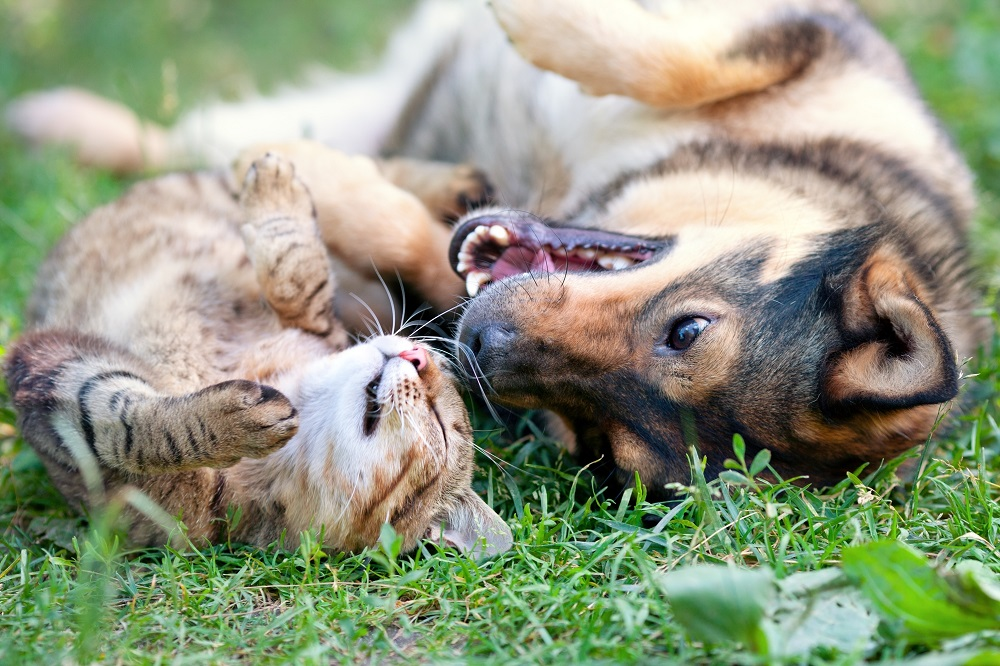outdoor cat and friendly dog
