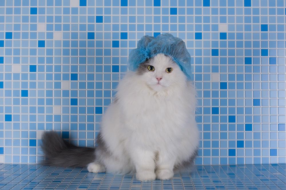 cat ready to take a bath