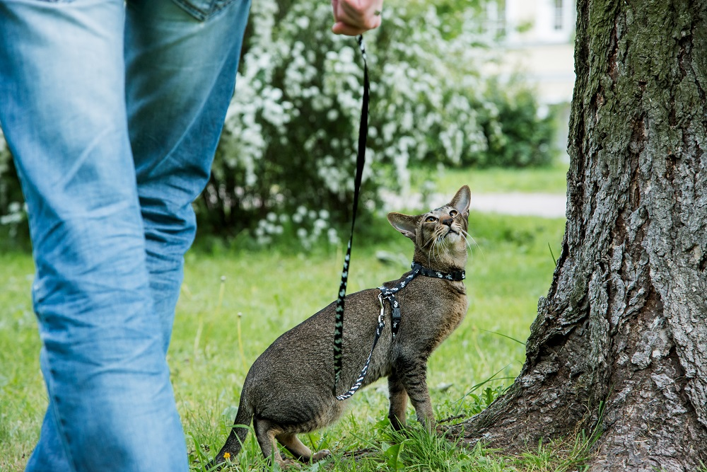 walking with cat on a leash